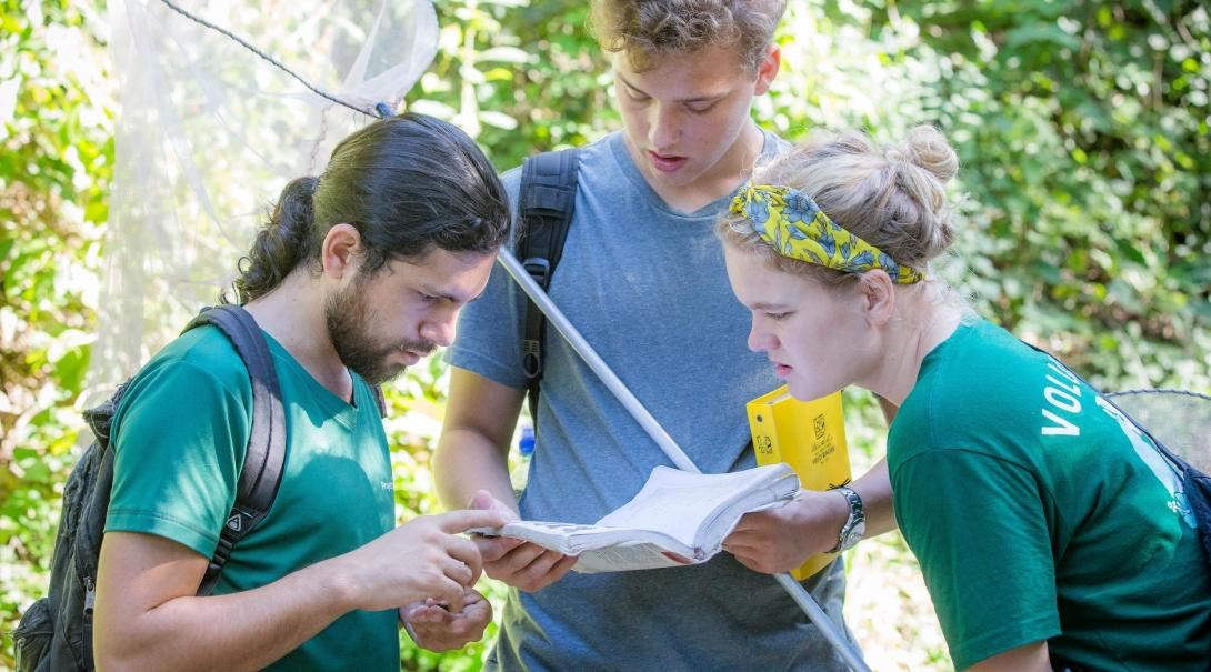 A group of students on an international volunteering program, identify a butterfly species